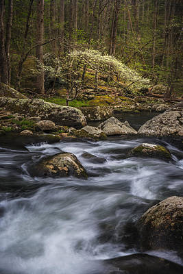 Dogwoods Photograph - Tranquility by Mike Lang