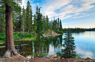 Pine Tree Photograph - Tranquility - Twin Lakes In Mammoth Lakes California by Jamie Pham