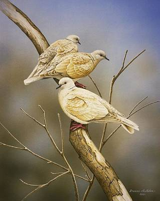 Painting - Tranquillity - Ring-necked Doves by Frances McMahon