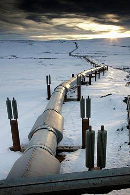 Dalton Highway Photograph - Trans-alaska Pipeline by Chris Madeley