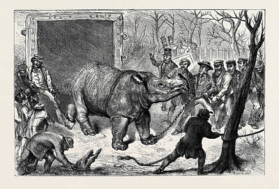 Transferring The Hairy Rhinoceros From Her Travelling Den Print by English School