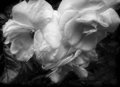 Photograph - Transient Beauty Vintage Roses In Black And White by Louise Kumpf