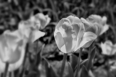 Photograph - Translucent by Joann Vitali