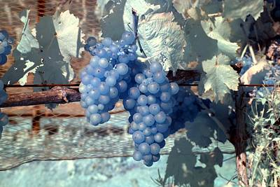 Photograph - Transparent Grapes by Rebecca Parker