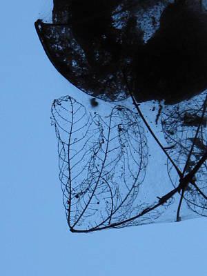Transparent Leaves Art Print