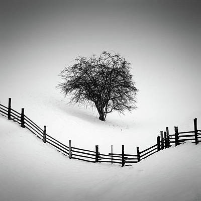 Winter Trees Photograph - Trapped by Martin Rak