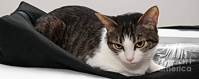 Andee Design Pets Photograph - Travel Studio Bag Cat Not Included by Andee Design
