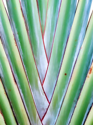 Photograph - Travelers Palm 2 by Dawn Eshelman