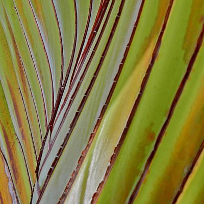 Photograph - Travelers Palm I V by Kirsten Giving