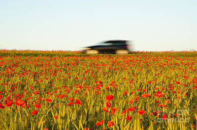 Photograph - Traveling Among Poppies by Kennerth and Birgitta Kullman