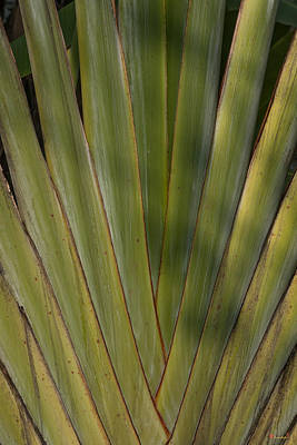 Photograph - Traveller's Palm Patterns Dthb1542 by Gerry Gantt
