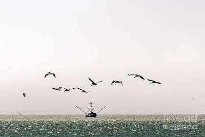 Photograph - Trawler And Pelicans by Kate Brown