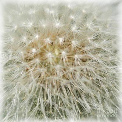 Photograph - Tread Softly by Liz  Alderdice