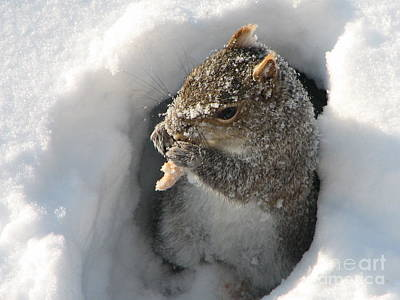 Funny Squirrel Photograph - Treasure Found by Roxy Riou