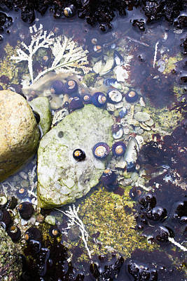 Animal Photograph - Treasures In The Tidepool by Priya Ghose