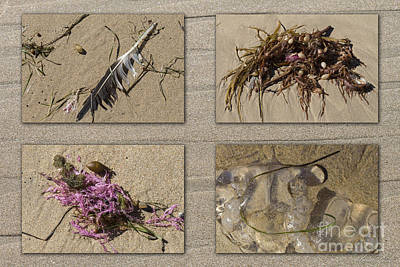 Photograph - Treasures Of The Coast by Linda Lees