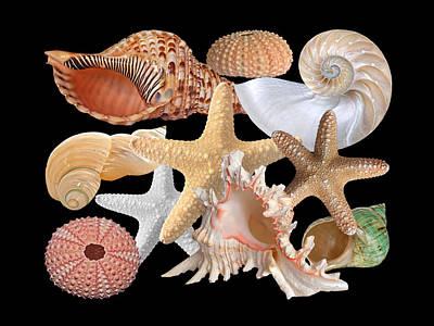 Seashells Photograph - Treasures Of The Deep On Black by Gill Billington