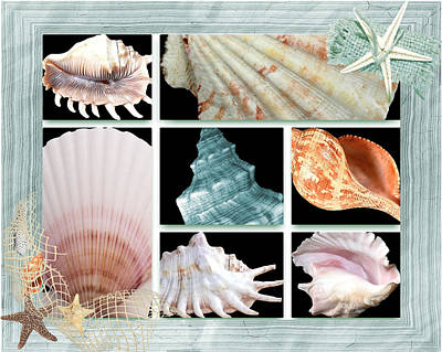 Digital Art - Treasures Of The Sea by Debra  Miller