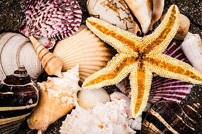 Photograph - Treasures Of The Sea by Sara Frank