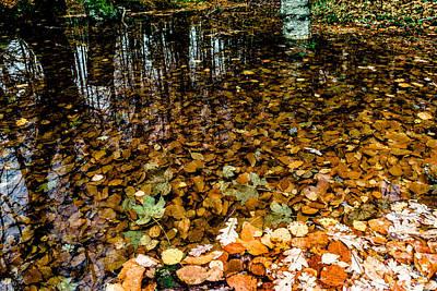 Photograph - Treasury Forest by Edgar Laureano