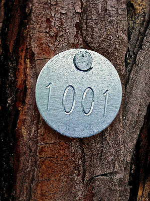 Photograph - Tree 1001 by Bill Owen
