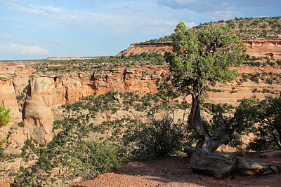 Photograph - Tree 3 Colorado National Monument by Mary Bedy