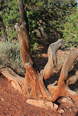 Photograph - Tree 4 Colorado National Monument by Mary Bedy