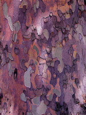 Tree Bark Photograph - Tree Abstract by Rona Black