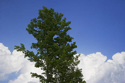 Photograph - Tree Against A Cloudy Blue Sky In Vermont by Randall Nyhof