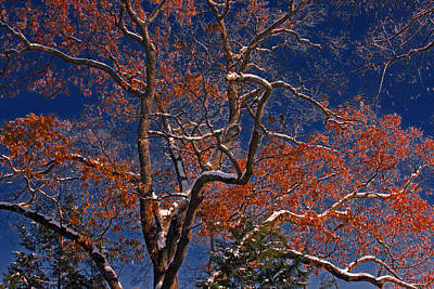 Art Print featuring the photograph Tree Against Dark Sky by Andy Lawless