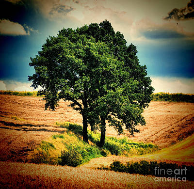 Art Print featuring the photograph Tree Alone by Boon Mee