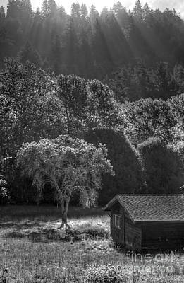 Photograph - Tree And Barn On Foggy Morning by Morgan Wright