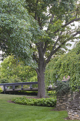 Tree And Bridge At Wharton Center Print by John McGraw