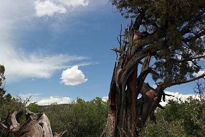 Photograph - Tree And Cloud 3 by Mary Bedy