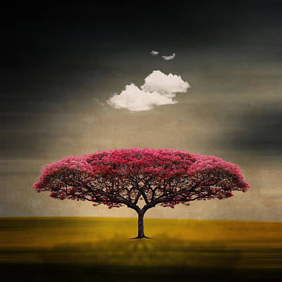 Photograph - Tree And Clouds by Philippe Sainte-laudy Photography