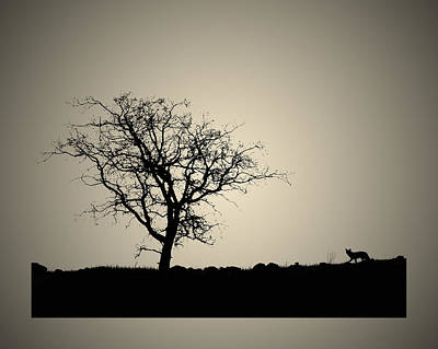 Photograph - Tree And Coyote Bonsai by Robert Woodward