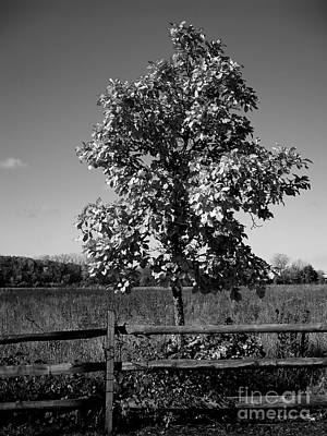 Frank J Casella Royalty-Free and Rights-Managed Images - Tree and Fence by Frank J Casella