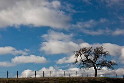 Barbed Wire Fences Photograph - Tree And Fence On A Landscape, Santa by Panoramic Images