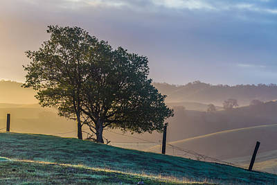 Giuseppe Cristiano - Tree And Fence With Some Fog by Marc Crumpler