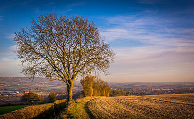Photograph - Tree And Fields by Gary Gillette