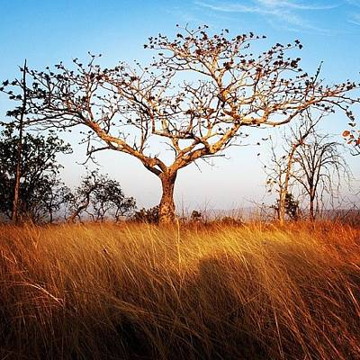 Landscapes Photograph - Tree And Grass by Hitendra SINKAR