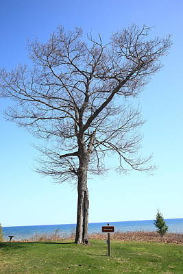Photograph - Tree And Great Lake by Frank Romeo