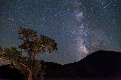Nightsky Photograph - Tree And Milky Way by Cat Connor