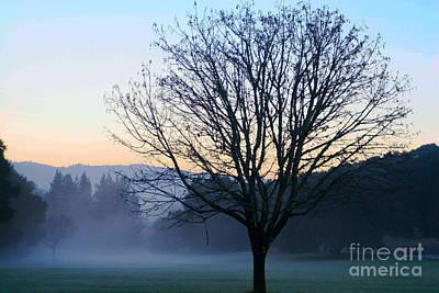 Tree And Mist Original