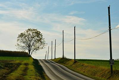 Photograph - Tree And Poles At Dusk by Tana Reiff