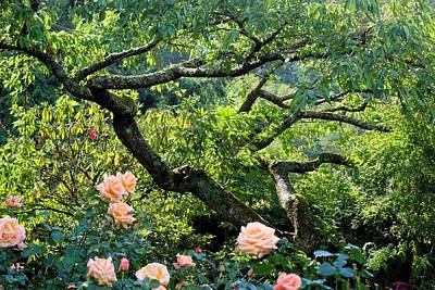 Photograph - Tree And Roses by Jane Girardot