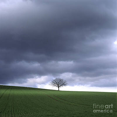 Walnut Tree Photograph - Tree And Stormy Sky  by Bernard Jaubert