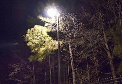 Tree And Streetlight  Art Print
