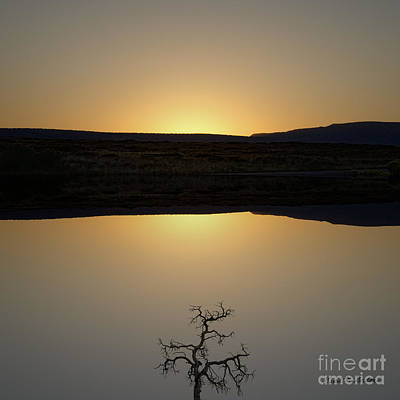 Montage Photograph - Tree And Sunset by Dave Gordon