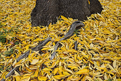 Tree And Yellow Leaves Original